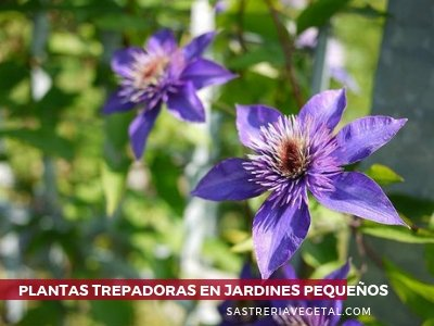 Plantas Trepadoras en el Diseño de Jardines