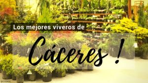 Cáceres, Directorio de Viveros.