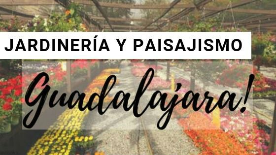 Jardinería en Guadalajara