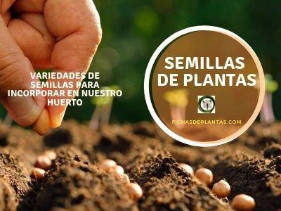 Semillas de Plantas