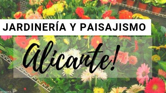 Alicante, Paisajismo y Jardinería