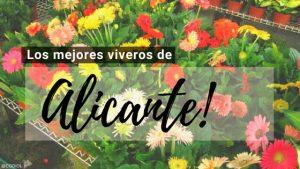Alicante, Directorio de Viveros.