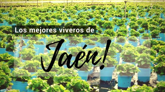 Jaen, Directorio de Viveros.