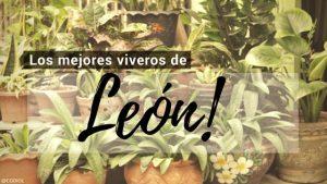 León, Directorio de Viveros.