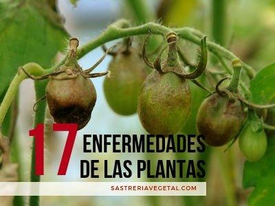 17 Enfermedades de las Plantas