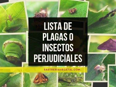 Lista de Plagas de Plantas