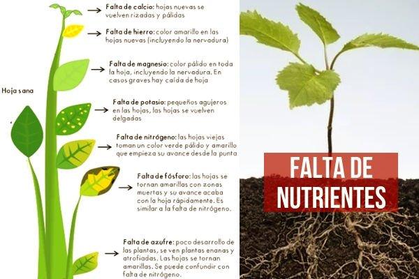 Reconocer las enfermedades de las plantas