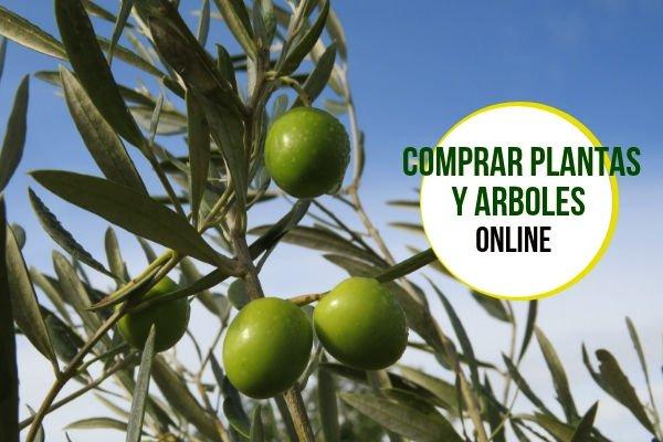 Comprar Arboles y Plantas