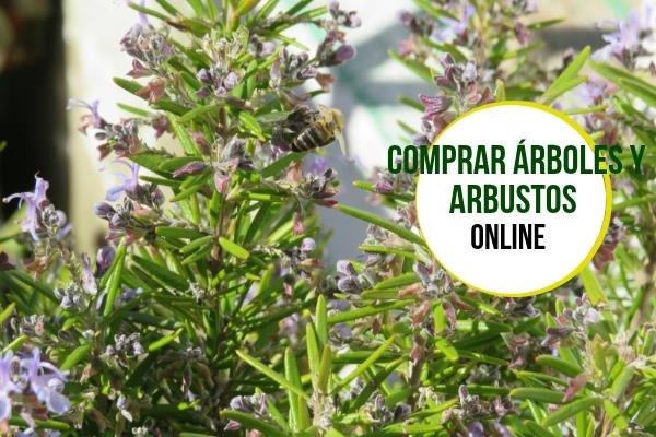 Comprar Arbustos y Arboles
