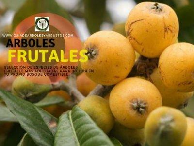Comprar Arboles Frutales