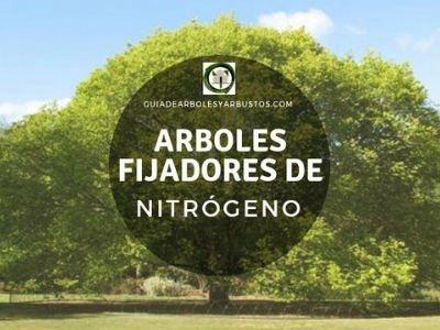Comprar Arboles Fijadores de Nitrógeno