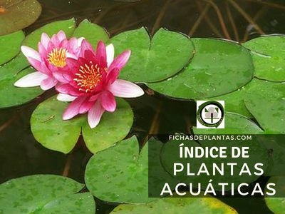 Comprar Plantas Acuáticas