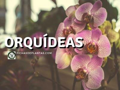 Orquideas Plantas
