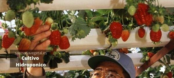 ventajas cultivo hidropónico