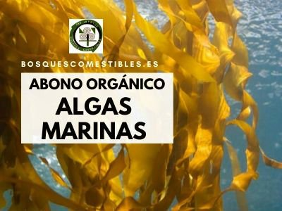 extracto de algas foliar