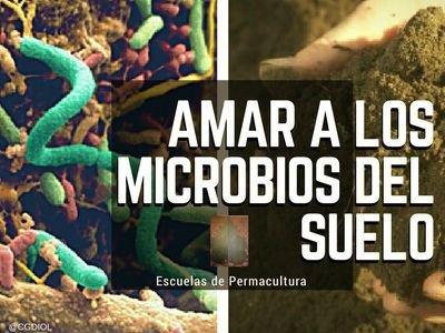 Qué son los microorganismos en el suelo