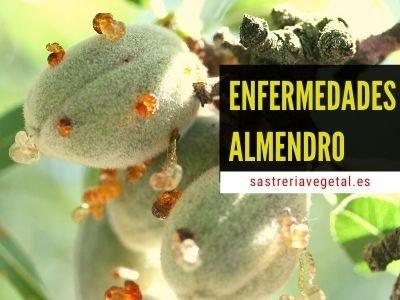 Enfermedades Almendro
