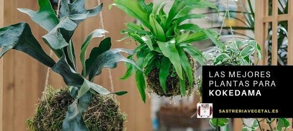Las mejores plantas para kokedama